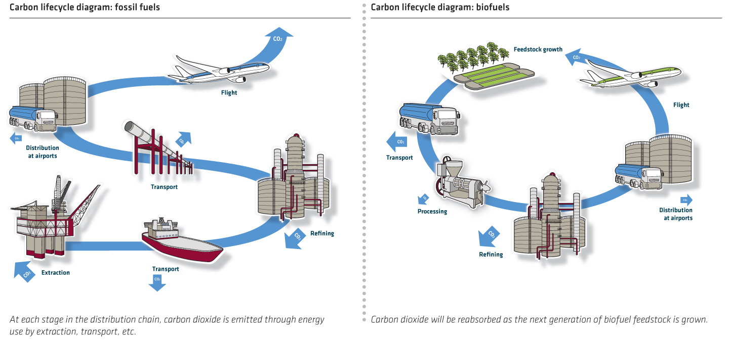 Carbon Lifecycle Diagram Fossil Fuelsbiofuels